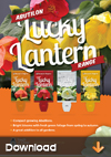 Abutilon-Lucky-Lanterns